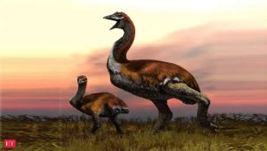 Elephant Bird Weighing Almost A Tonne Named World's Largest