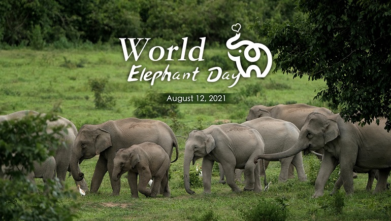 World Elephant Day Brings Attention To The Endangered African Elephant