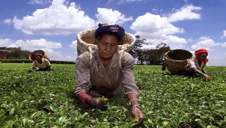 China To Import More African Agricultural Products